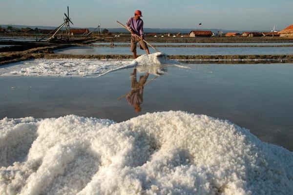 PAMEKASAN,11/9-HARGA GARAM NAIK. Seorang petani memanen garam olahannya di Desa Bunder, Pademawu, Pamekasan